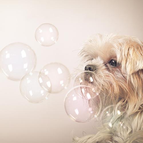 犬の皮膚病・アレルギーに全館に引いた軟水100%でケアします