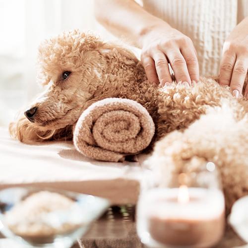 犬のリラクゼーション・ペットアロマテラピー